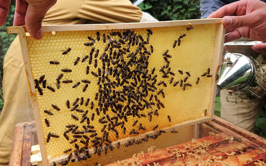 Spätsommerpflege der Kolleg-Bienen